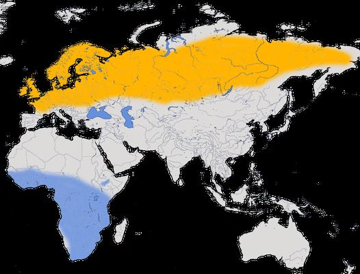 Karte zur Verbreitung des Fitis.