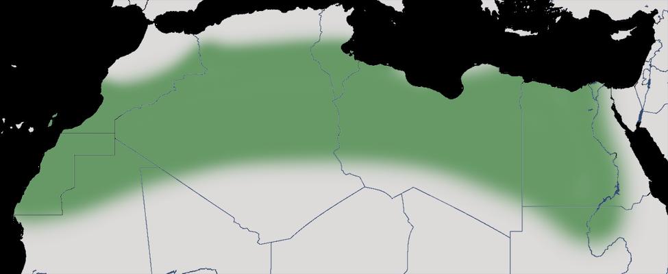 Karte zur Verbreitung der Kragentrappe (Chlamydotis undulata)