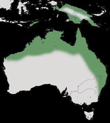 Karte zur Verbreitung des Fasanspornkuckucks