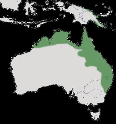 Karte zur Verbreitung des Braunbrust-Schilffinks