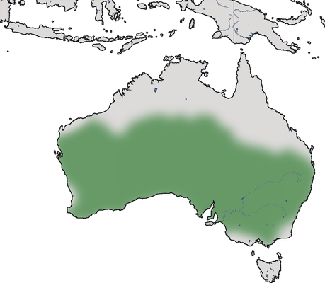 Karte zur Verbreitung des Brauensäbler (Pomatostomus superciliosus).
