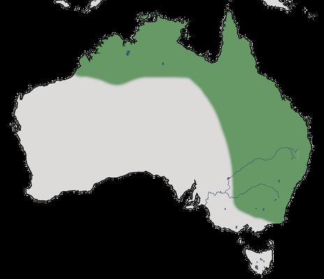 Karte zur Verbreitung des Ringelastrilds