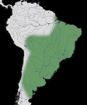 Karte zur Verbreitung des Guirakuckucks