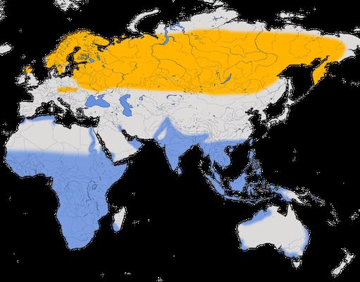 Karte zur Verbreitung des Bruchwasserläufers