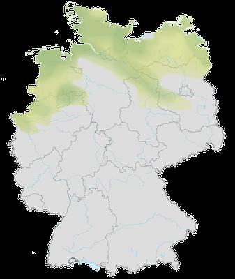 Karte zum Vorkommen der Löffelente in Deutschland.