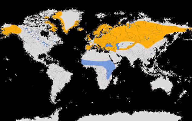 Karte zur Verbreitung des Steinschmätzers