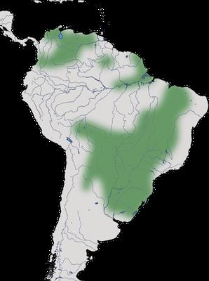 Karte zur Verbreitung des Weißhalsibis (Theristicus caudatus)
