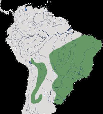 Karte zur Verbreitung des Orangebürzel-Schwalbentyranns