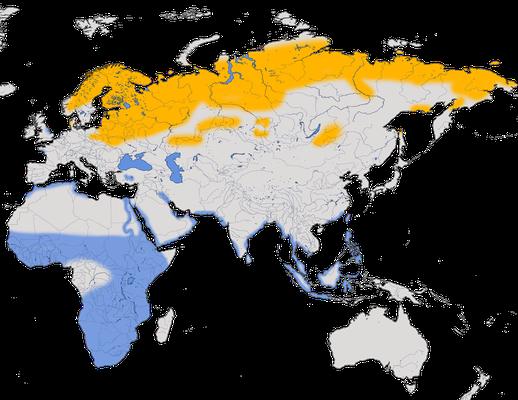 Karte zur Verbreitung des Kampfläufers.