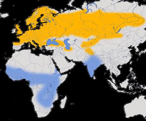 Karte zur Verbreitung des Baumpieper (Anthus trivialis).