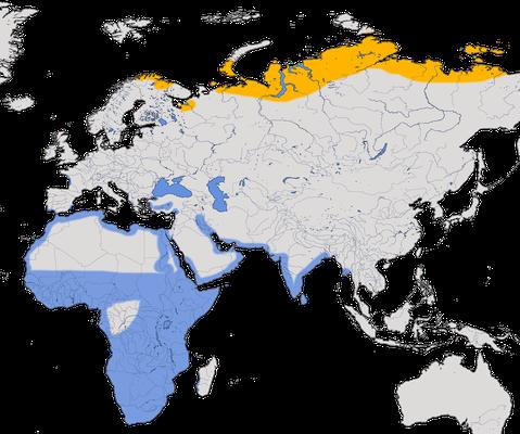 Karte zur Verbreitug des Zwergstrandläufers
