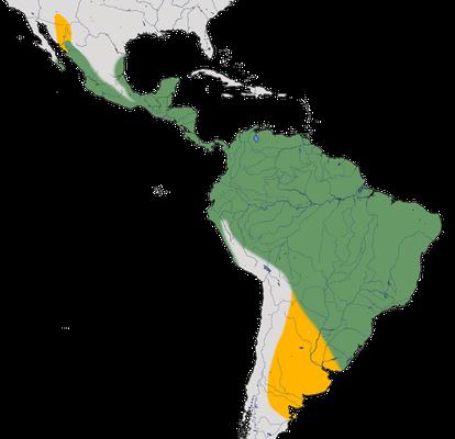 Karte zur Verbreitung des Trauerkönigstyranns