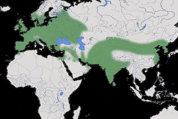 Karte zur Verbreitung der Türkentaube (Streptopelia decaocto).