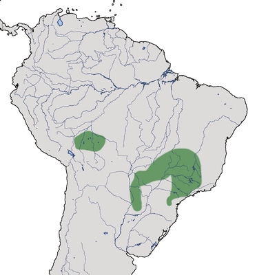 Karte zur Verbreitung des Hahnenschwanztyranns