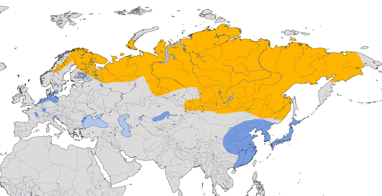 Karte zur Verbreitung der Saatgans