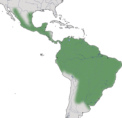 Karte zur Verbreitung der Weißstirntaube (Leptotila verreauxi)