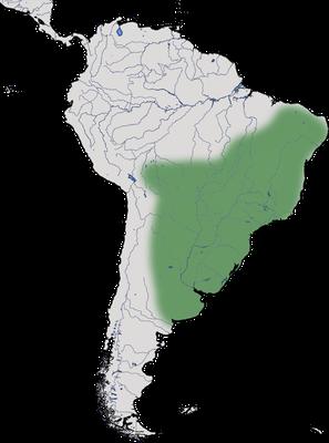 Karte zur Verbreitung der Picazurotaube (Patagioenas picazuro)