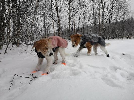 Almas erste Erfahrungen mit Schnee (03.12.2019)