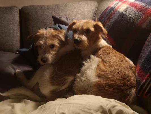 Alma & Stina = Beste Freunde (12.11.2019)