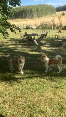 Figo & Aldo (hinten Agnes)