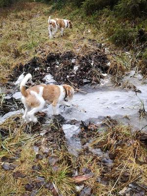 25.11.2019: Alma entdeckt Eis. Für Stina ist das natürlich nix Besonderes mehr...