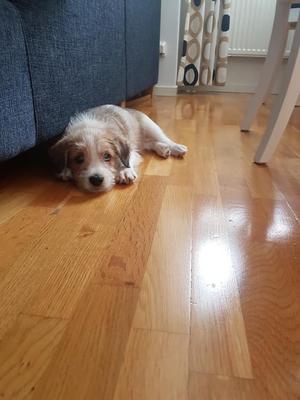 22.09.2019: Bosse ist gut in seinem neuen Zuhause angekommen.