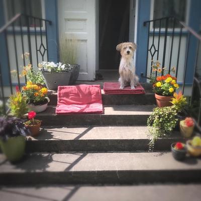 Millie am 24.07.2020: Fast genau 1 Jahr alt und zum ersten Mal läufig.