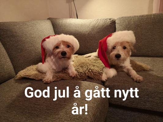 Weihnachtsfeier- & Neujahrsgrüße von Stina & Alma