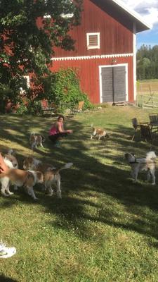 Aldo, Nahla, Figo, Alma, Almas Lebensgefährtin Stina & Kuling