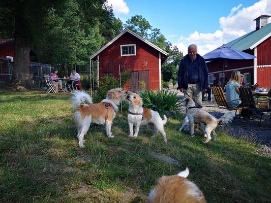 Nahla, Agnes, Kuling, Maja & Almas Popo im Vordergrund