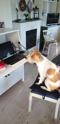 25.06.2020: Maja im Corona-Home-Office