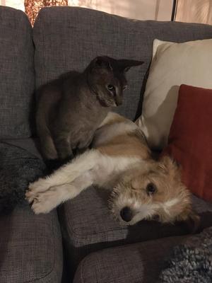 Agnes wird von der Katze bewacht. (31.10.2019)