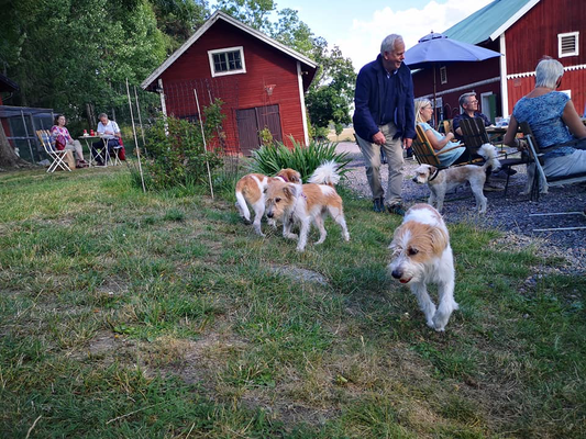 Alma, Nahla, Maja & Kuling