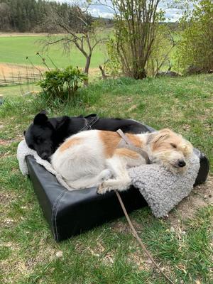 15.05.2020: Beste Freunde teilen sich auch das Outdoor-Bett. Lina & Agnes