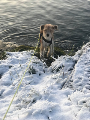 10.12.2019: Millie liebt den Schnee!