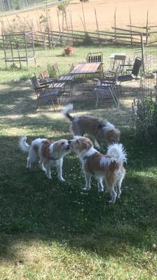 Agnes, Nahla & Figo