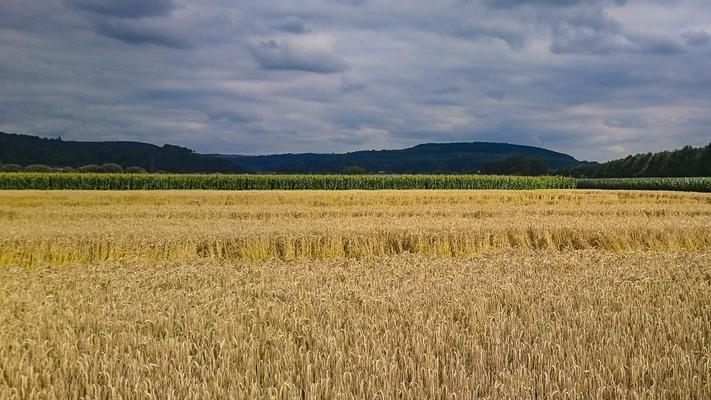 Saarwiesen