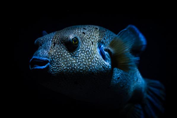 Fisch im Meeresaquarium Zella Mehlis