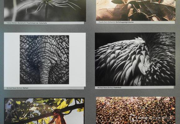 """Siegerbild - """"Kunstformen in der Natur"""" – Ausstellung zum Fotowettbewerb der Museumslöwen e.V.  Gotha"""