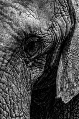 Elefant im Zoo Erfurt