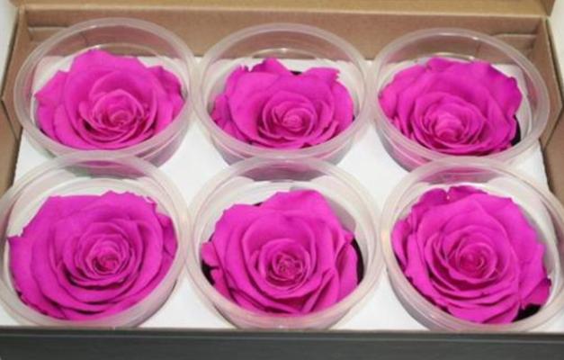 haltbare Rose lila