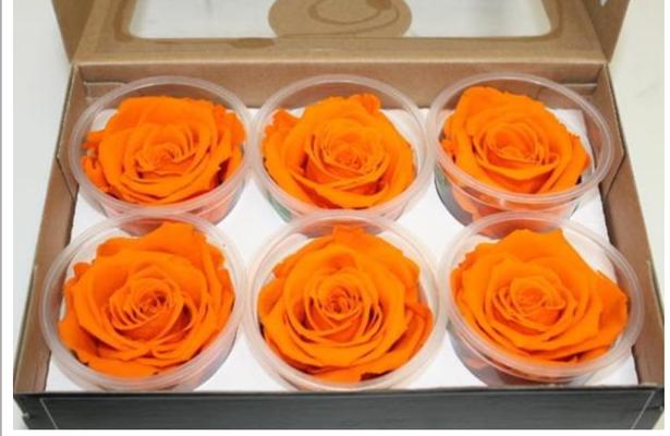 Longlife Rose orange