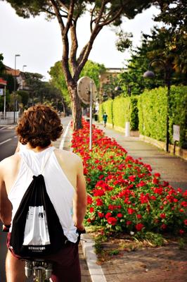 Blumengesäumter Radweg auf dem Rückweg von Desenzano nach Sirmione am Garda See