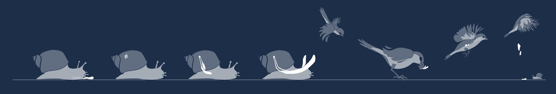 Lebenszyklus des Parasiten