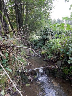 Pluwig. Der Geizenburger Waschbach wenige Meter vor der Einmündung in die Ruwer.