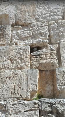 Klagemauer mit weisser Taube