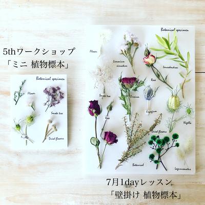 5周年イベント ワークショップ「ミニ植物標本」&「7月1dayレッスン 壁掛け植物標本」