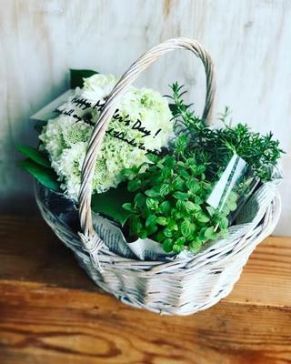 母の日ギフト2017 「フラワーアレンジメント&ハーブの鉢植」カゴMサイズ