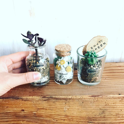 4月 東京 自由が丘 ワークショップ「3種類の植物を使ったミニテラリウム3個セット」