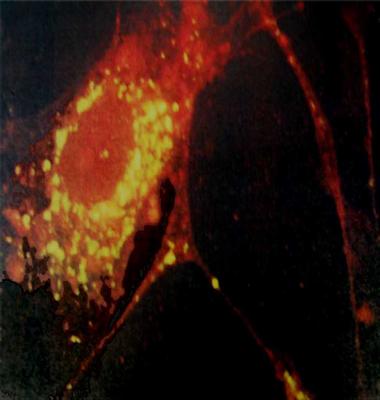 Cell-based Diagnostics Assays